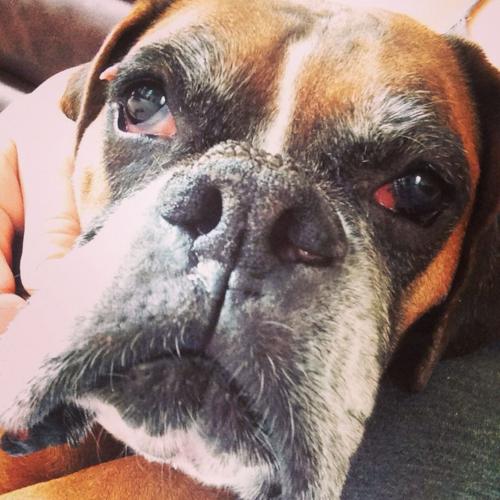 My Old (dog) Man